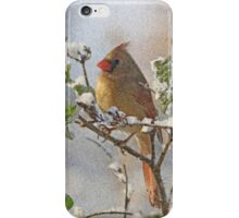 Cardinal on Snowy Branch iPhone Case/Skin
