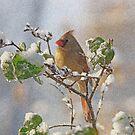 Cardinal on Snowy Branch by Sandy Keeton