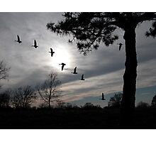 Sunset flight Photographic Print