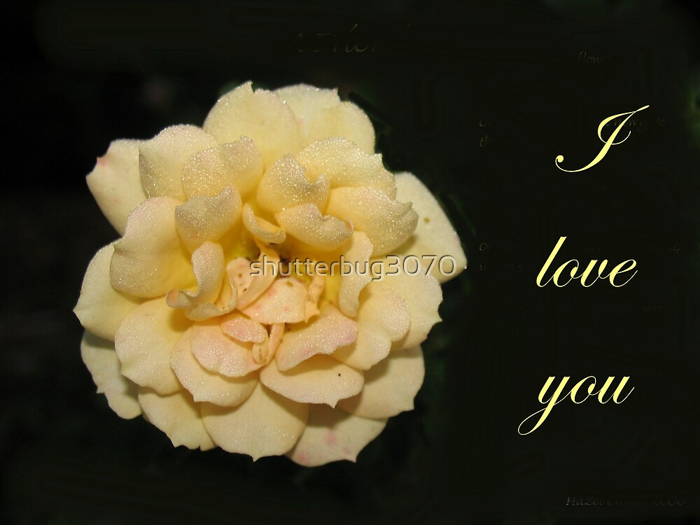I love you (yellow rose) by shutterbug3070