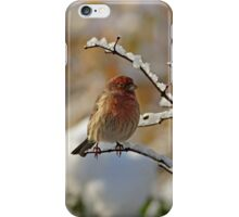 House Finch in Snow iPhone Case/Skin