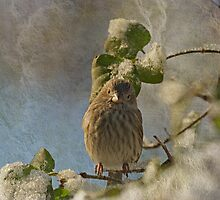 Cute Little Finch by Sandy Keeton