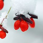 Frozen Red Fruit by Debbie Oppermann