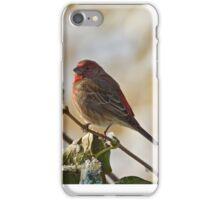 Finch Perching iPhone Case/Skin