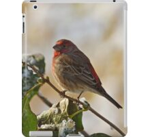 Finch Perching iPad Case/Skin
