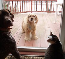 Will You please let Bently in. by pumice