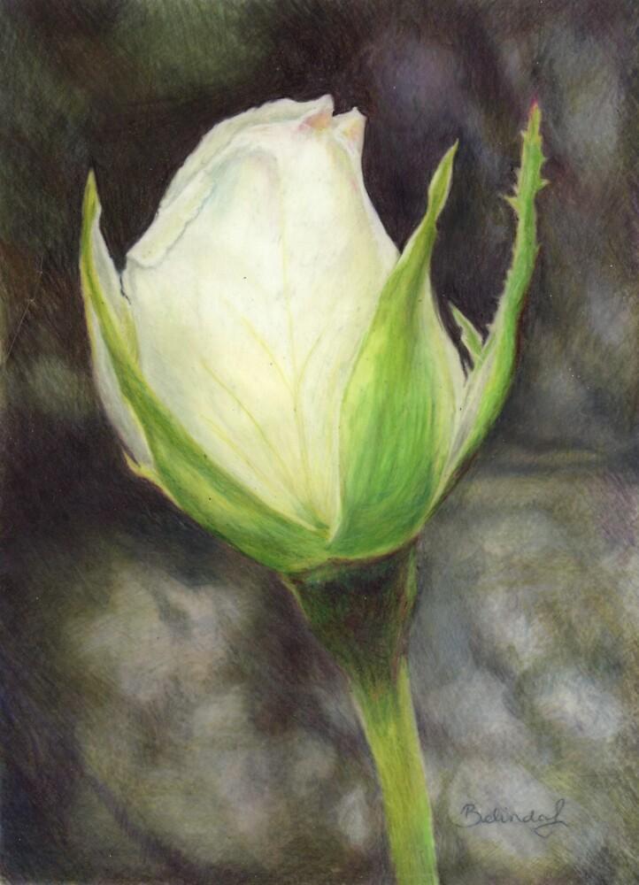 White Rose Bud by Belinda Lindhardt