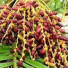 palm tree fruit pod... by Wieslaw Jan Syposz