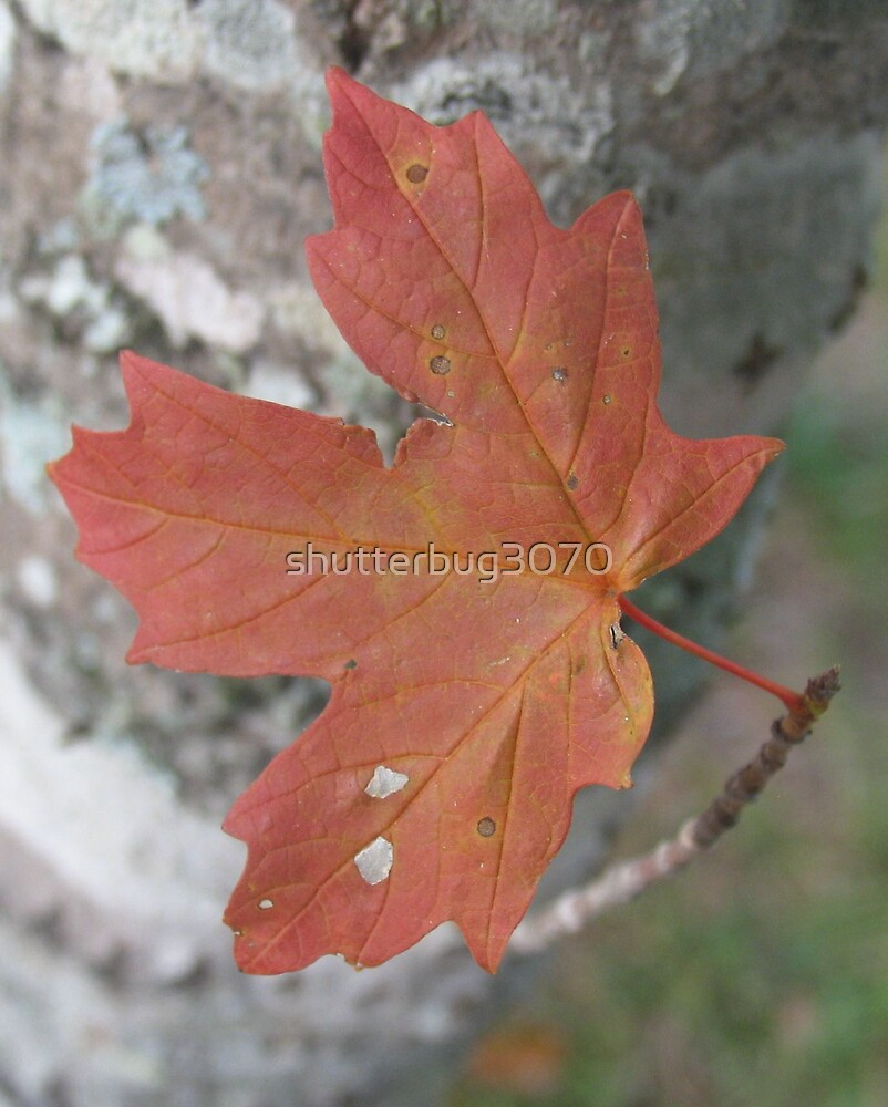 Autumn Leaf by shutterbug3070