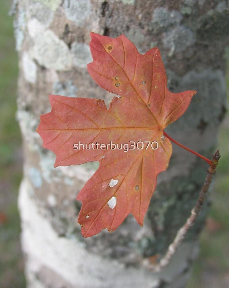 Autumn Leaf 2 by shutterbug3070