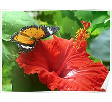 Butterfly & Hibiscus Poster