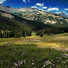 Among The Mountain Wildflowers by John  De Bord Photography