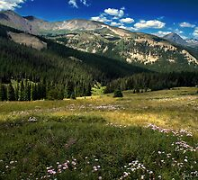 Among The Mountain Wildflowers by John  De Bord Photography