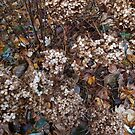 Autumn Dried Flowers and Leaves by Marie Van Schie