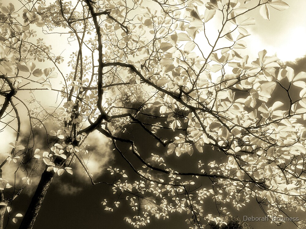 Enchanted by Deborah  Bowness