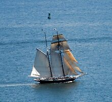Sailing ~ Point Loma California by Marie Sharp
