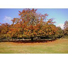 Autumn Colours 2 Photographic Print