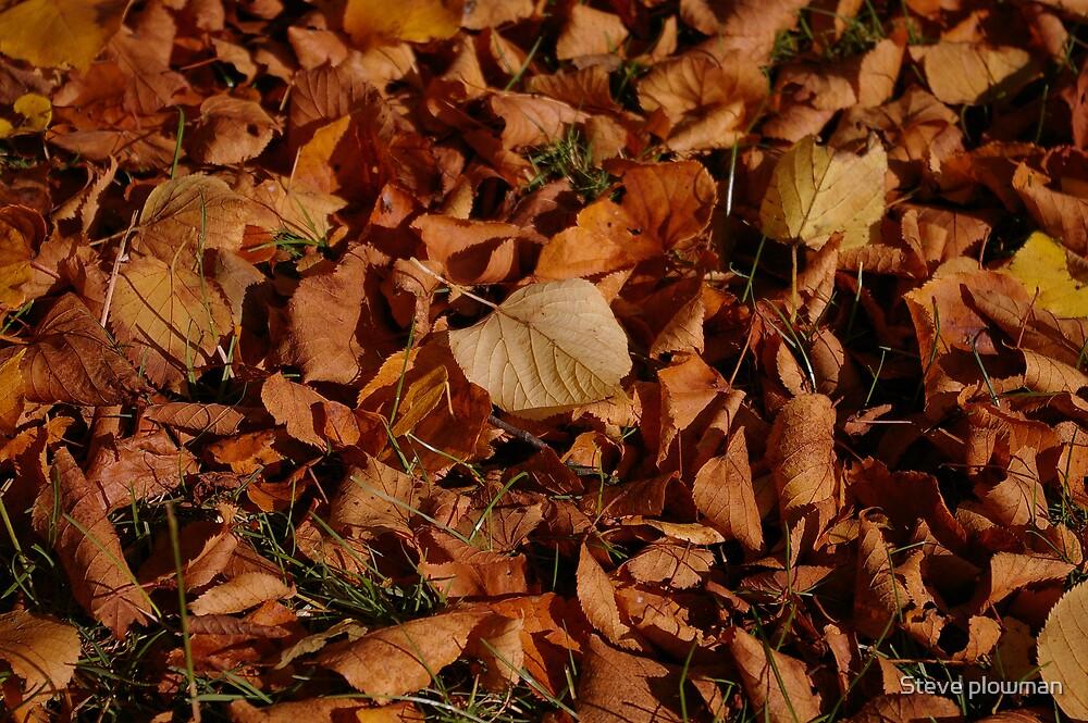 Autumn Carpet by Steve plowman