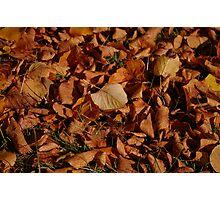 Autumn Carpet Photographic Print