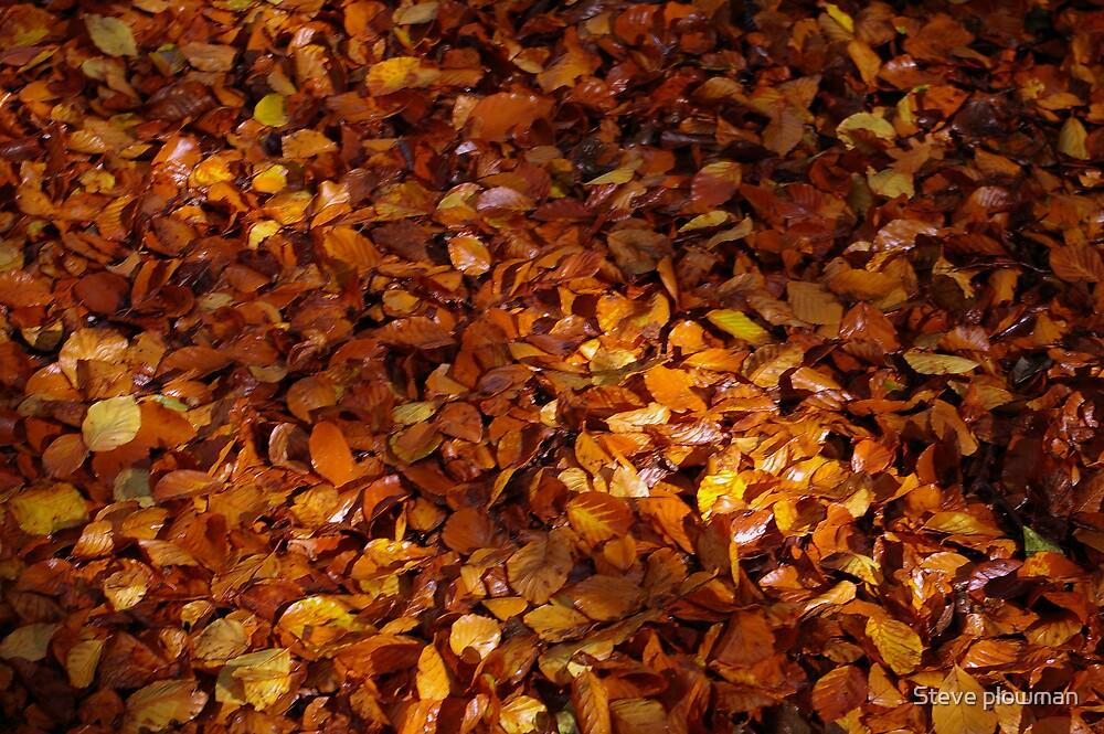 Autumn Carpet 2 by Steve plowman
