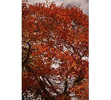 Golden tree 2 Photographic Print