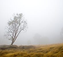Lonely Gum by AustralianImagery
