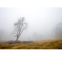 Lonely Gum Photographic Print