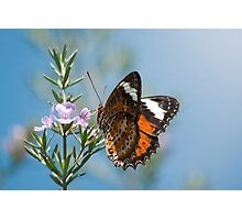 Butterfly on Pink Flower Photographic Print