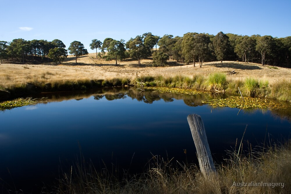Bush Reflection by AustralianImagery