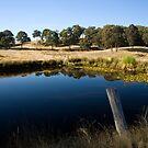 Bush Reflection by AustralianImagery
