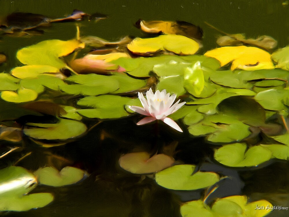 Water Lily in Massandra Palace's fountain by Jon Ayres