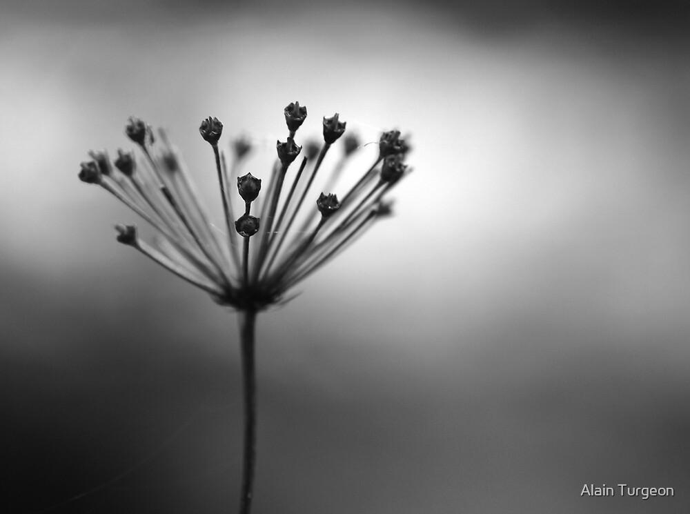 Bursting by Alain Turgeon