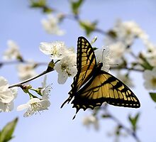 Dance of the Butterfly by Cher Cutshaw