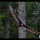 soaring free by panthrcat
