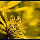 yellownessness by panthrcat