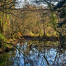 Fynnone Pond by mlphoto