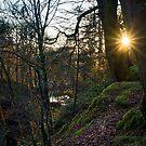 Fynnone Woods by mlphoto