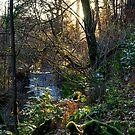 Fynnone Falls by mlphoto