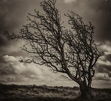 HAWTHORN by Michael Carter