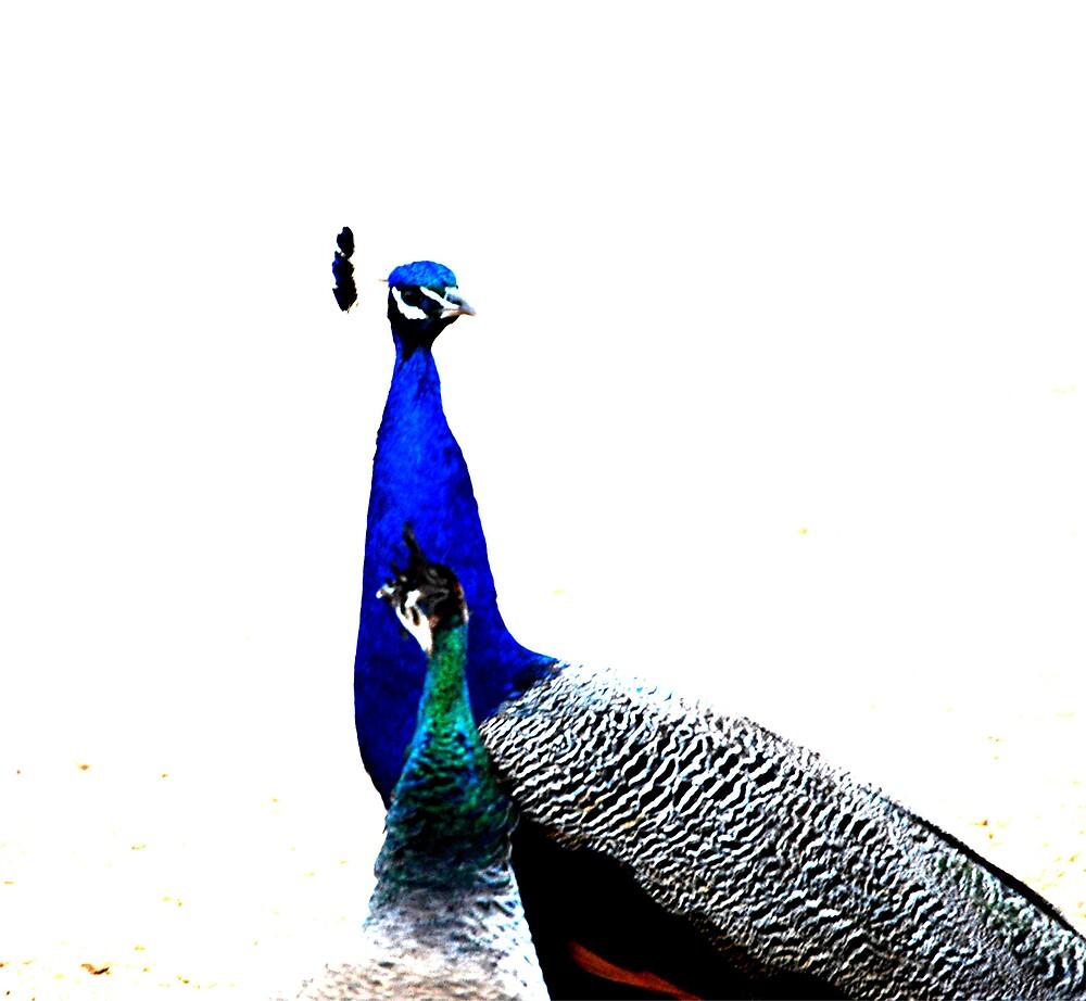 Peacocks by Princessbren2006