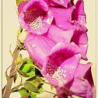 Purple Flower by sanyaks