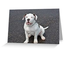 Puppy Sqaut Greeting Card