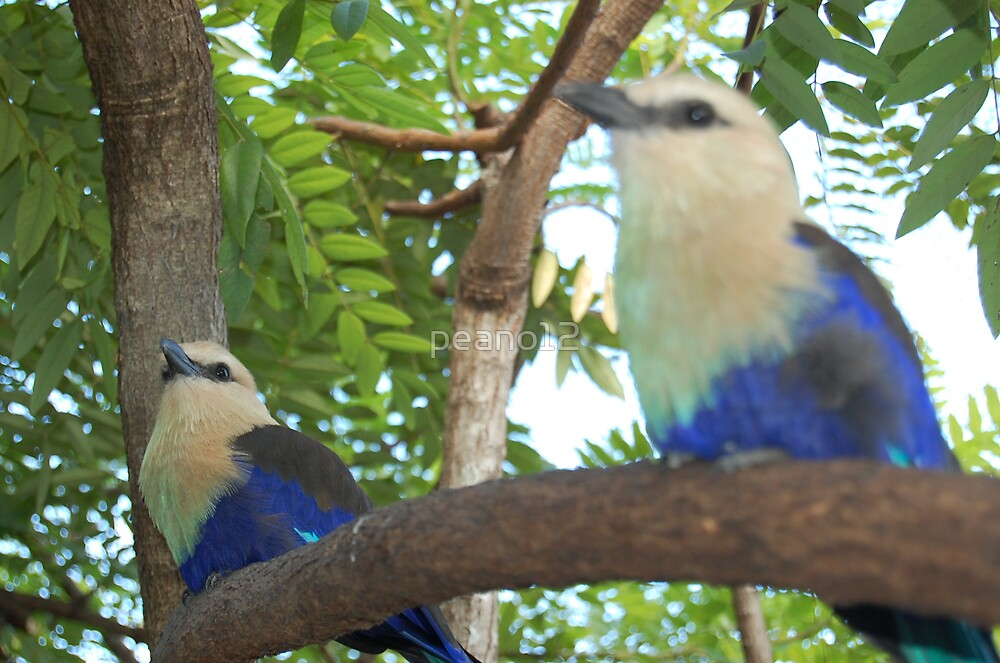 Birds by peano12