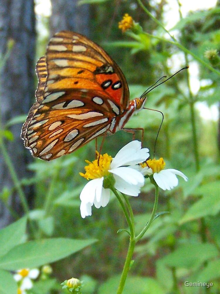 butterfly by Gemineye
