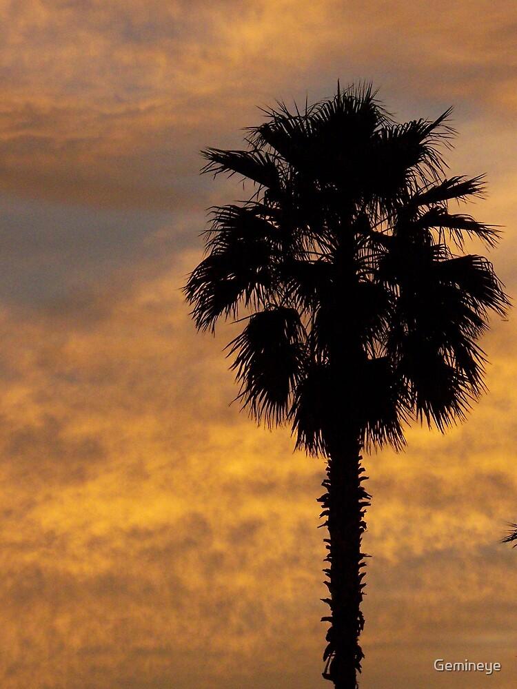 Florida morning by Gemineye