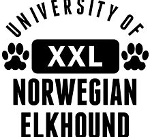 University Of Norwegian Elkhound by kwg2200