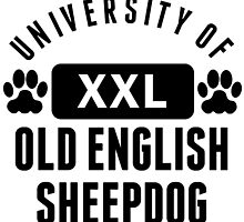University Of Old English Sheepdog by kwg2200