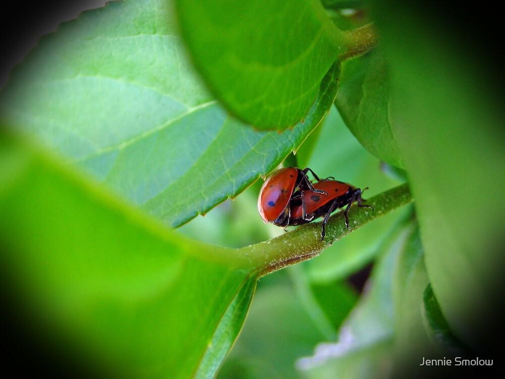 Lady Bug Love by Jennie Smolow