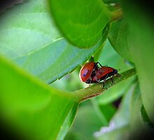 Lady Bug Love by Jennie Smolow