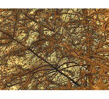 Needles 2 Photographic Print